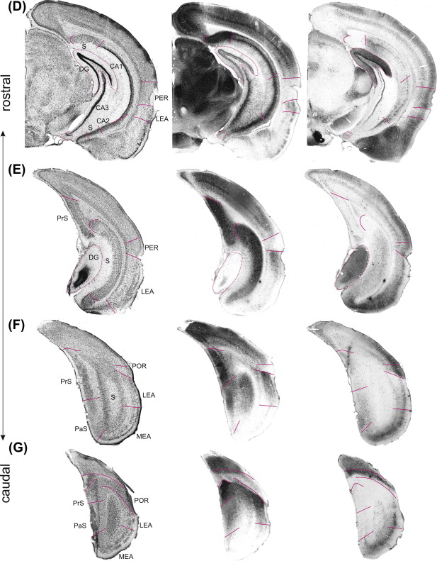 Hippocampus - ScienceDirect