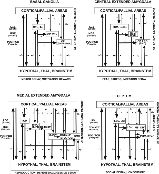 Subpallial Structures - ScienceDirect on