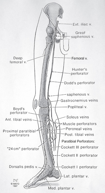 Venous Anatomy, Physiology, and Pathophysiology - ScienceDirect