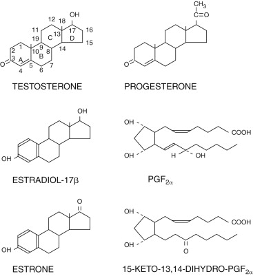 Steroid Hormones An Overview Sciencedirect Topics