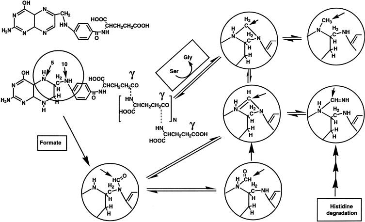 Aminobenzoic Acid