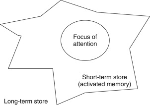what is primary memory in psychology
