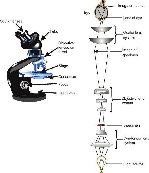 Optical Microscope An Overview Sciencedirect Topics