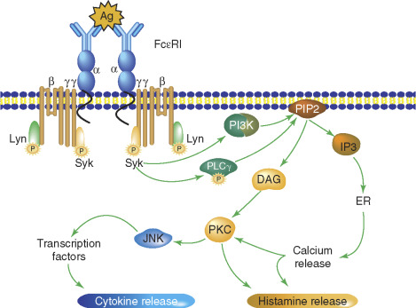 Mast Cell Stabilizer - an overview | ScienceDirect Topics