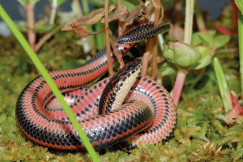 Terrestrial Reptiles - an overview | ScienceDirect Topics