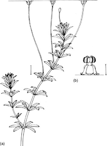 Asexual reproduction in plants toobers and zots