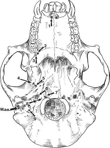 Jugal Bone