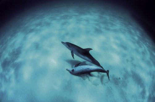 Communication in Marine Mammals - ScienceDirect
