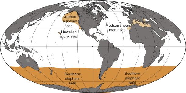 Monachus - an overview | ScienceDirect Topics