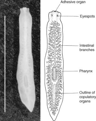 parasite studies