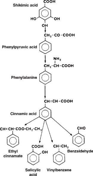 Ethyl Decanoate - an overview | ScienceDirect Topics