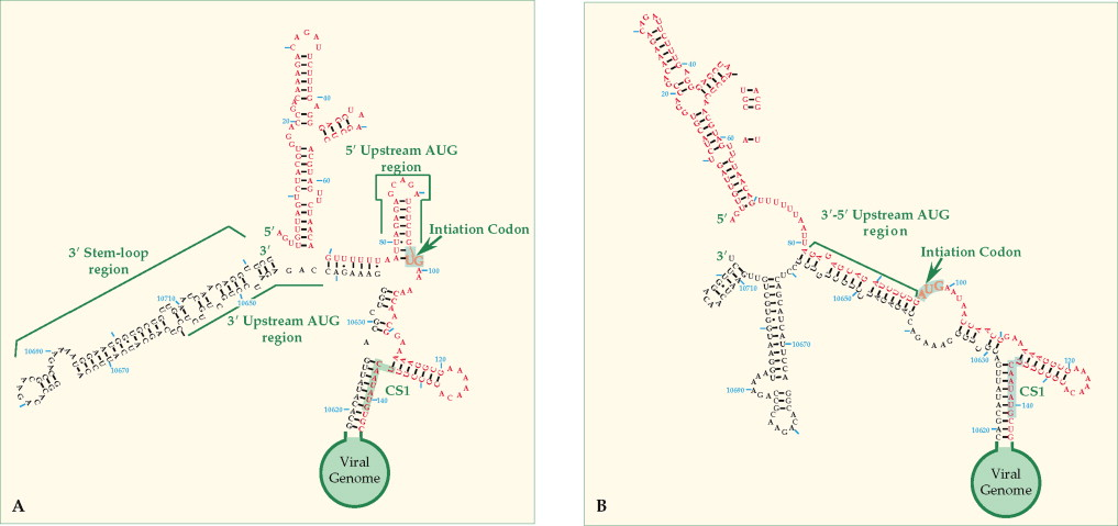 RNA Replication An Overview ScienceDirect Topics