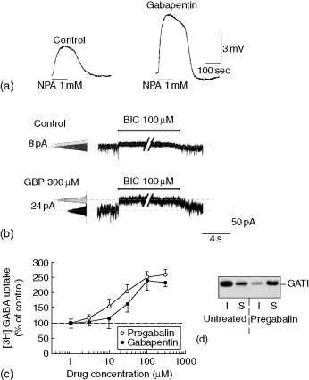 GABA Analogues - an overview   ScienceDirect Topics