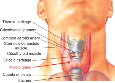 Thyroid Gland An Overview Sciencedirect Topics
