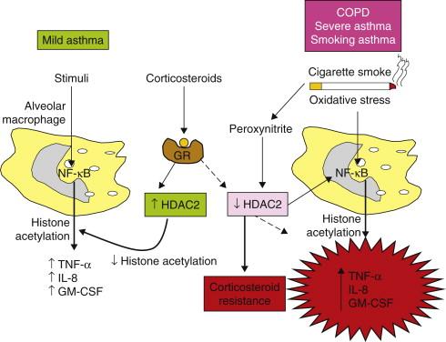 Steroid resistance organon der heilkunst pdf