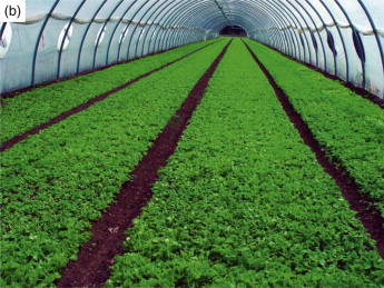 Protected Cultivation - an overview   ScienceDirect Topics