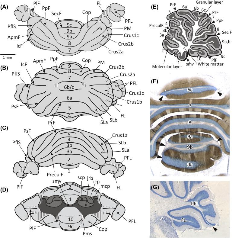 Gross Anatomy An Overview Sciencedirect Topics