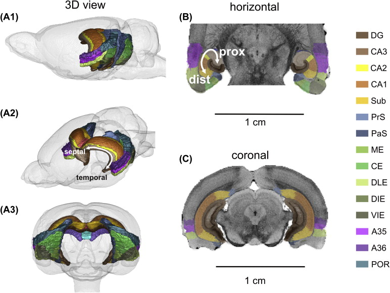 Hippocampal Formation Sciencedirect