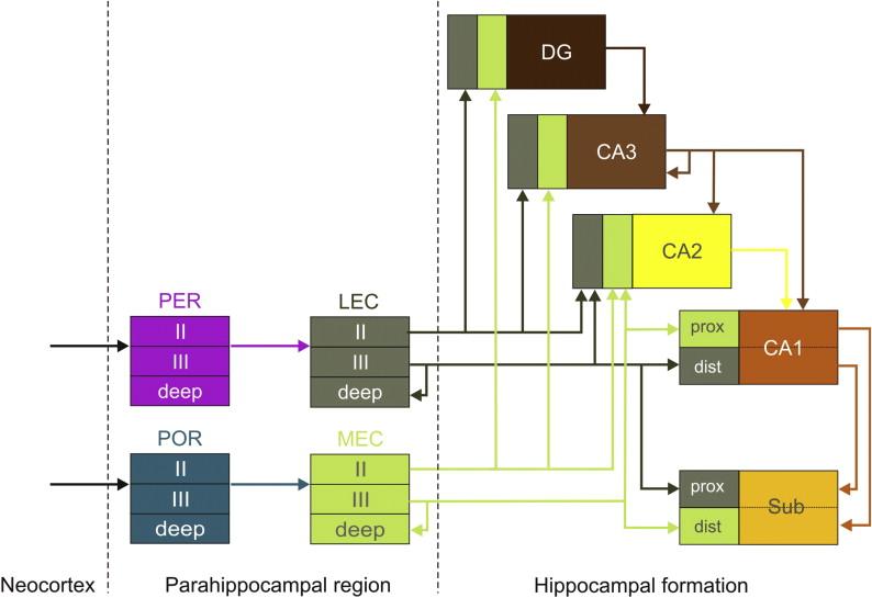 Tremendous Hippocampal Formation Sciencedirect Wiring Cloud Aboleophagdienstapotheekhoekschewaardnl