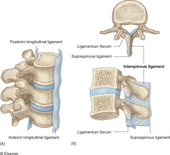 Anterior Longitudinal Ligament An Overview Sciencedirect Topics