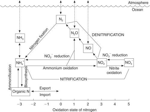 Nitrogen Cycle - an overview | ScienceDirect Topics