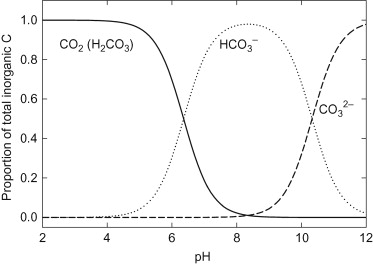 inorganic carbon definition