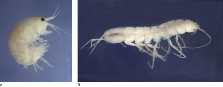 Water Flea An Overview Sciencedirect Topics