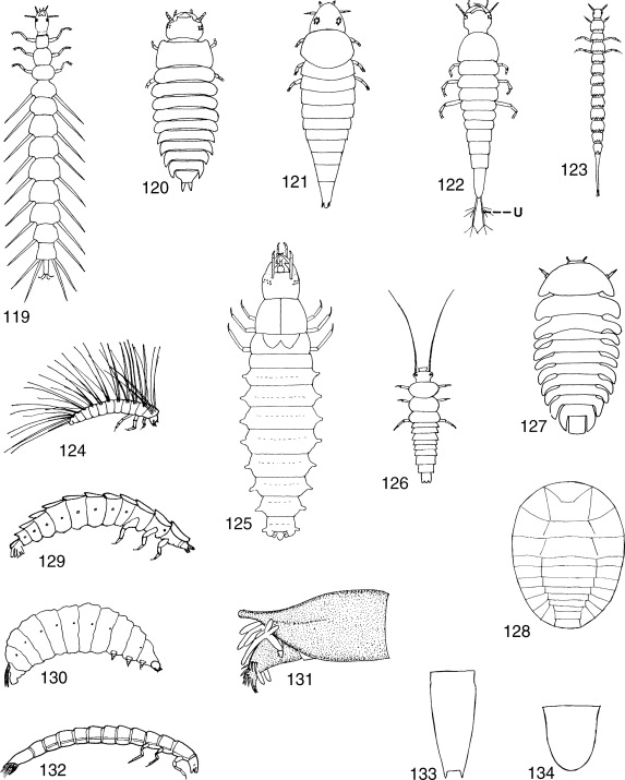 Diversity And Classification Of Insects And Collembola