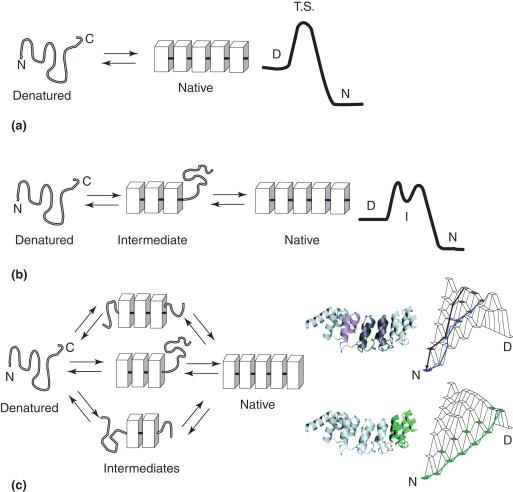 Internalin An Overview Sciencedirect Topics
