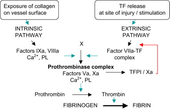 Thrombocyte Free Plasma - an overview | ScienceDirect Topics