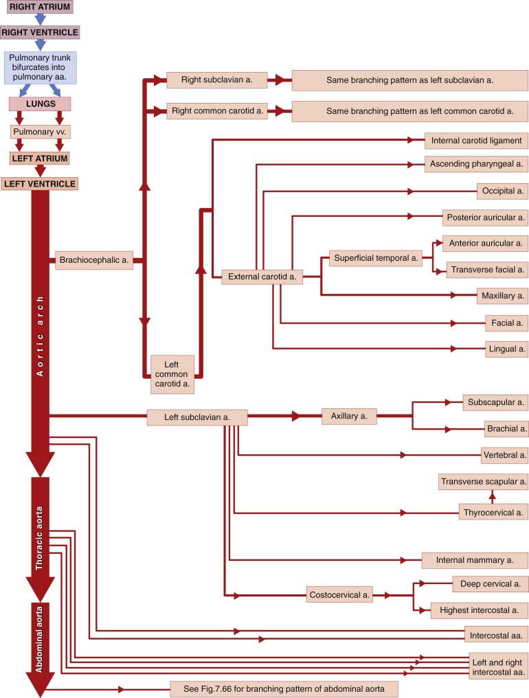 Gastroduodenal Artery An Overview Sciencedirect Topics