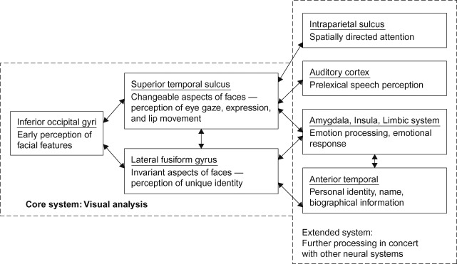 Fusiform Face Area - an overview   ScienceDirect Topics