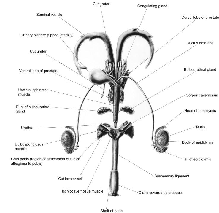 Anatomy, Physiology, and Behavior - ScienceDirect