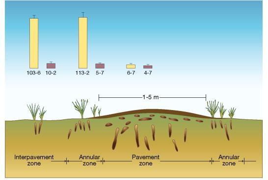 Soil Porosity - an overview | ScienceDirect Topics
