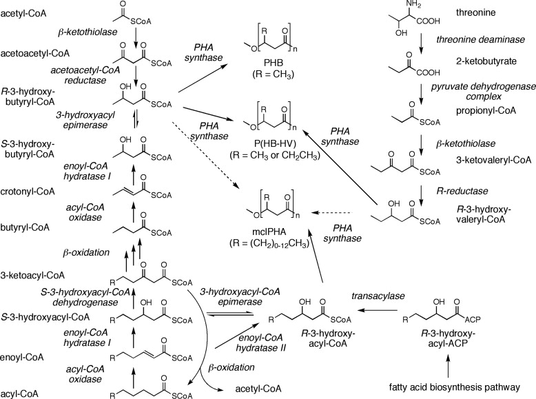 Phytohaemagglutinin - an overview   ScienceDirect Topics