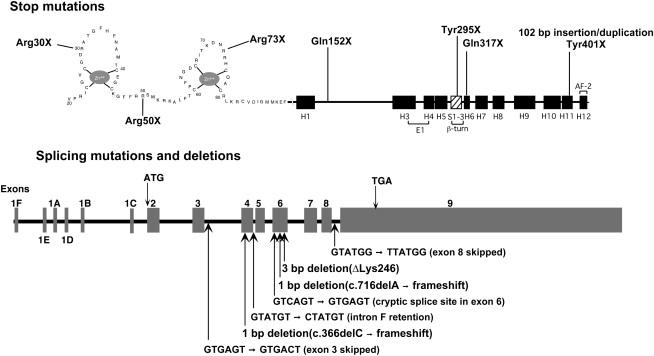 Hereditary 1 25 Dihydroxyvitamin D Resistant Rickets Sciencedirect