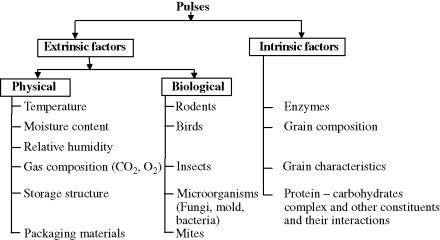 Grain Processing - an overview | ScienceDirect Topics