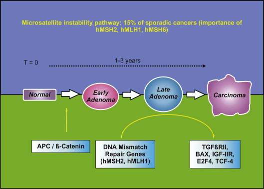 Microsatellite Instability An Overview Sciencedirect Topics