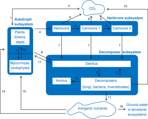Radiometric dating lab activity on ecosystems