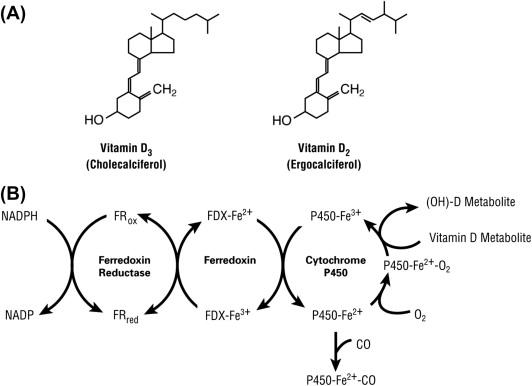 Vitamin D Biology - ScienceDirect