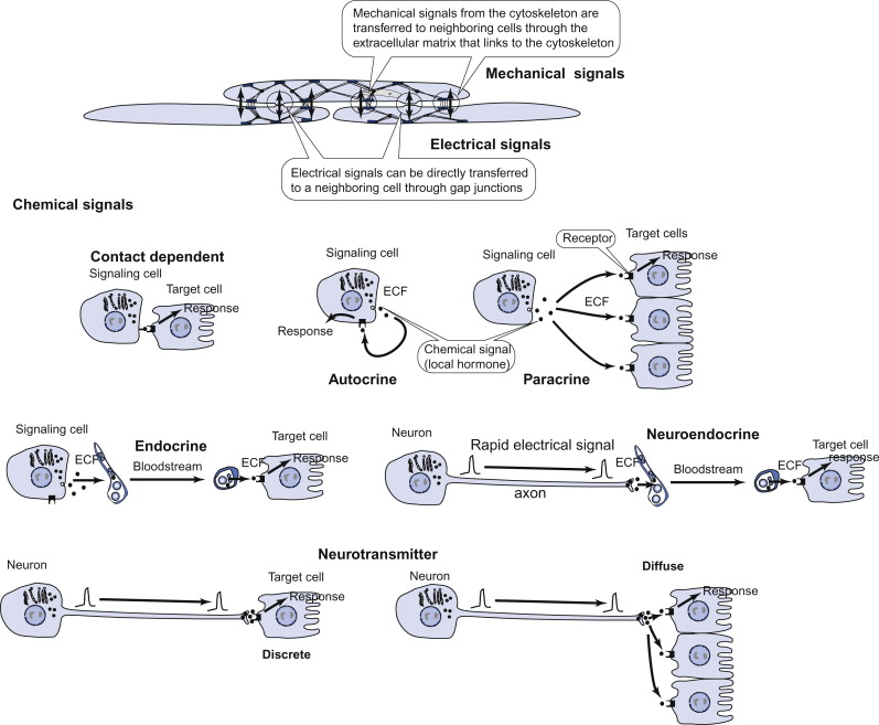 Mechanical Signal - an overview | ScienceDirect Topics