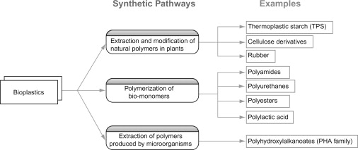 Bio-Based Polymer - an overview | ScienceDirect Topics