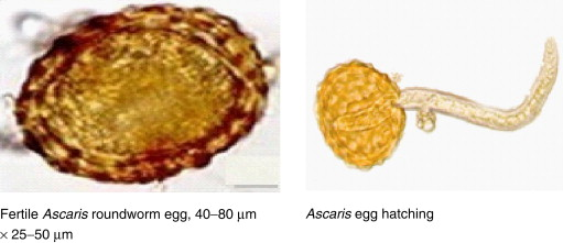helminthiasis neem
