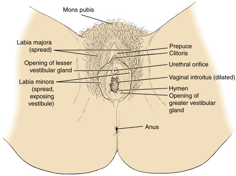 Clitoris inside the vagina useful