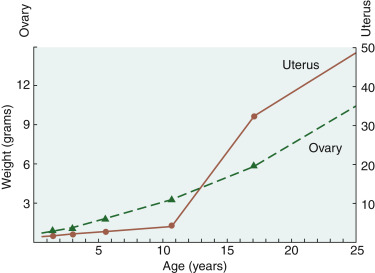 Puberty - an overview | ScienceDirect Topics