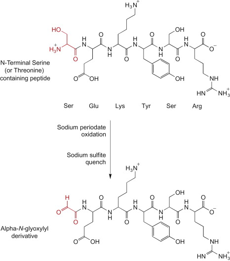 Sodium Periodate - an overview | ScienceDirect Topics