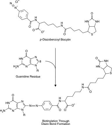 p aminobenzoic acid ir