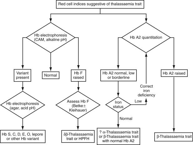 Hemoglobin A2 - an overview | ScienceDirect Topics