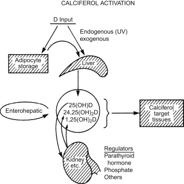 Ergocalciferol - an overview | ScienceDirect Topics
