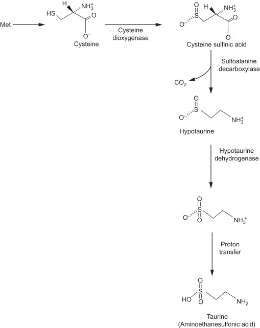 Essential Amino Acids - an overview | ScienceDirect Topics